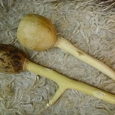 sámáncsörgő